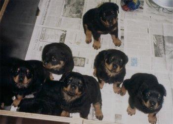 pups Kaya x Pascha